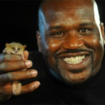 Shaquille O Neal; Photo:N/A